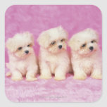 Maltese Dog; is a small breed of white dog that Stickers