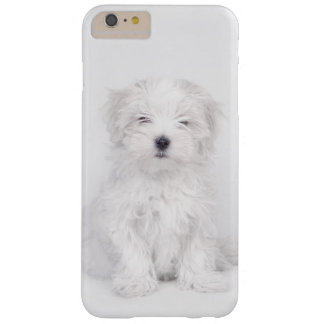 Maltese dog puppy barely there iPhone 6 plus case