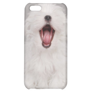 Maltese dog puppy iPhone 5C covers