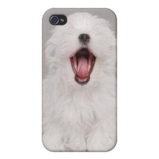 Maltese dog puppy iPhone 4/4S case