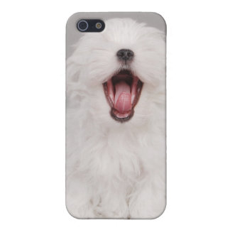 Maltese dog puppy iPhone SE/5/5s cover