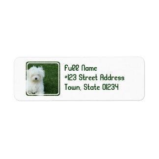 Maltese Dog Return Address Mailing Label Return Address Label