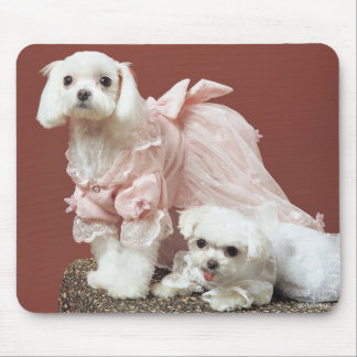 Maltese Dogs Mouse Pad