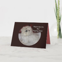 Maltese Get Well Soon Card for Pet Lovers