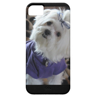 Maltese Gifts iPhone SE/5/5s Case