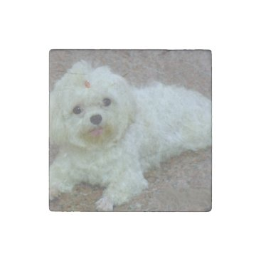 Beach Themed maltese laying stone magnet