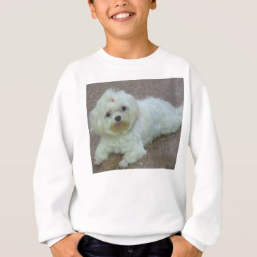 Beach Themed maltese laying sweatshirt