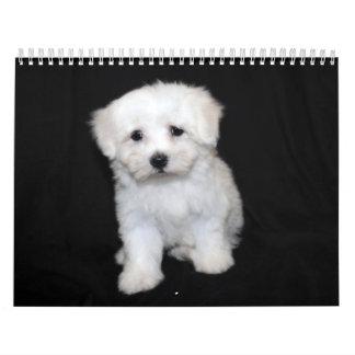 Maltese & Maltipoo Puppy Calendar