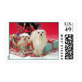 Maltese Merry Christmas Holiday Postage Stamps