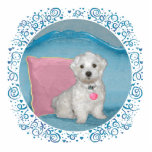 Maltese on Turquoise Cut Out