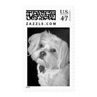 Maltese Postage Stamp Med