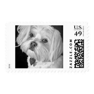 Maltese Postage Stamp Sm
