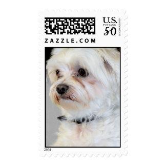 Maltese Postage Stamps