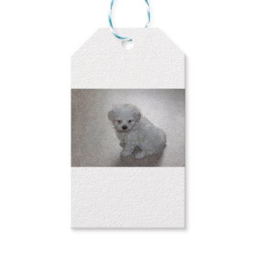 Beach Themed maltese pup gift tags