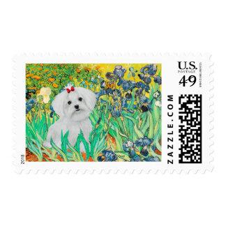 MALTESE pup - Irises Postage