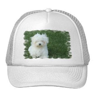 Maltese Puppies Baseball Hat