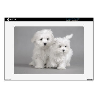 Maltese puppies decals for laptops