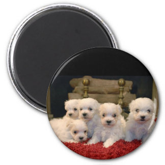 Maltese Puppies for Puppy Lovers Everywhere 2 Inch Round Magnet