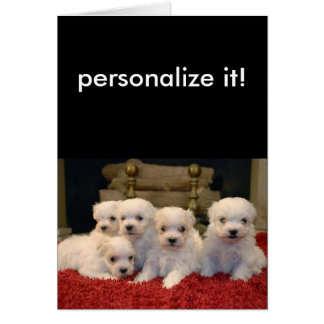 Maltese Puppies for Puppy Lovers Everywhere Card