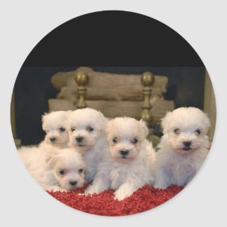 Maltese Puppies for Puppy Lovers Everywhere Classic Round Sticker