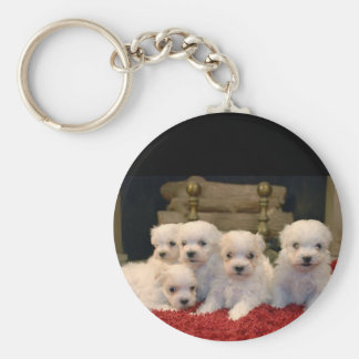 Maltese Puppies for Puppy Lovers Everywhere Keychains