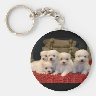 Maltese Puppies for Puppy Lovers Everywhere Key Chains