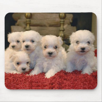 Maltese Puppies for Puppy Lovers Everywhere Mousepads