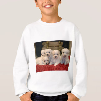 Maltese Puppies for Puppy Lovers Everywhere Sweatshirt
