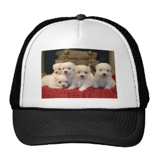 Maltese Puppies for Puppy Lovers Everywhere Trucker Hat