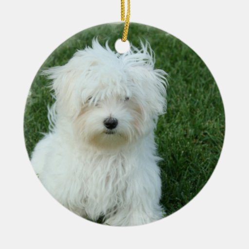 Maltese Puppies Ornament