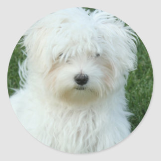 Maltese Puppies Stickers