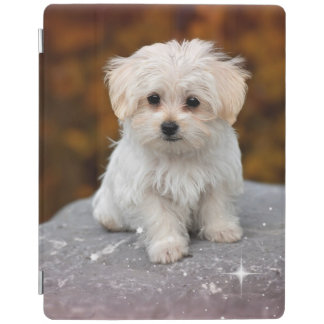 Maltese Puppy...Adorable iPad Smart Cover