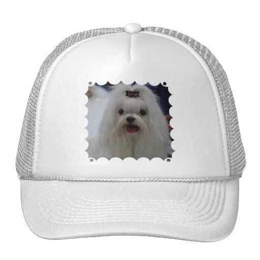 Maltese Puppy Baseball Hat