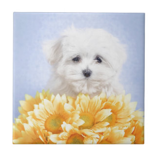 Maltese puppy ceramic tile