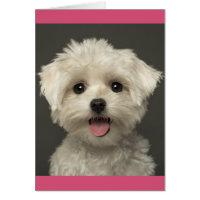 Maltese Puppy Dog Blank Note Card