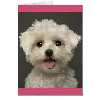 Maltese Puppy Dog Blank Note Card