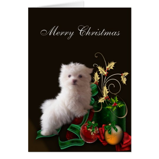 Maltese Puppy Dog Christmas Card