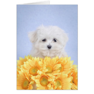 Maltese puppy greeting card