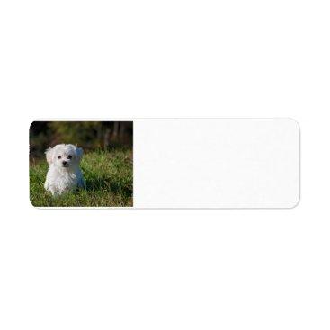 Beach Themed maltese puppy in grass label