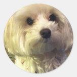 Maltese puppy love sticker