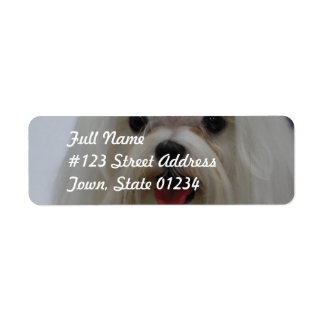 Maltese Puppy Mailing Labels