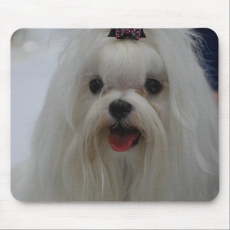Maltese Puppy Mouse Pad