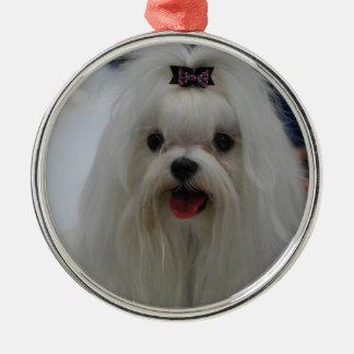 Maltese Puppy Ornament