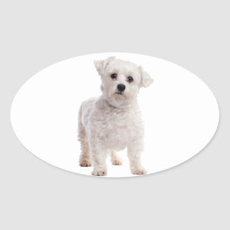 Maltese Puppy Oval Sticker