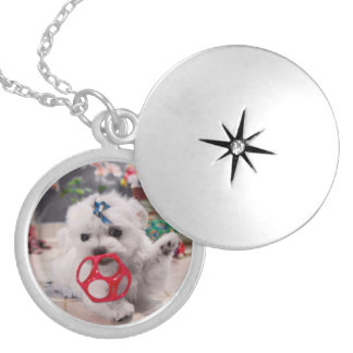 Maltese Puppy Playing on a Pendant