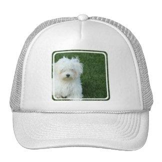 Maltese Rescue Baseball Hat