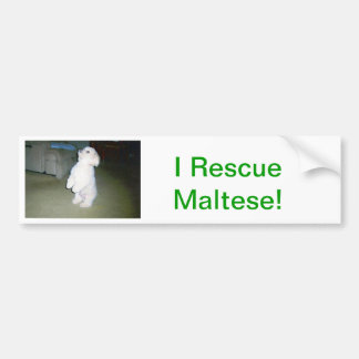 Maltese Sitting Up Bumper Sticker
