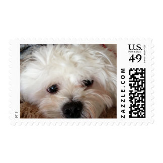 MALTESE STAMPS