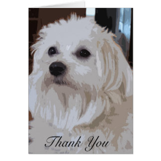 Maltese Thank You Note Cards