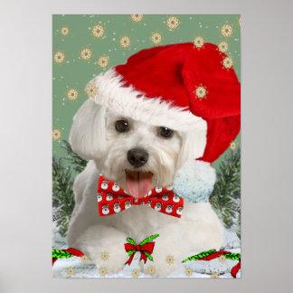 Maltese Wish You Merry Christmas  Poster